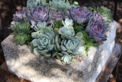 Succulents in Balinese trough.