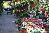 Roger's Gardens in Corona Del Mar