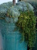 coastal/succulent