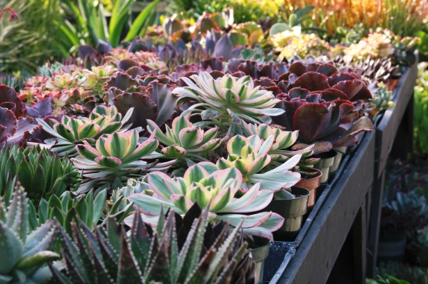 Roger's Garden in Corona del Mar