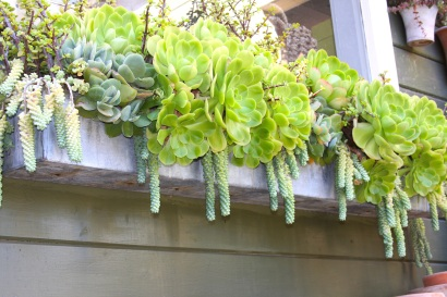 Succulents in a window box