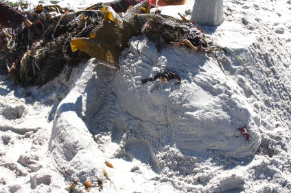Seaweed Dragon