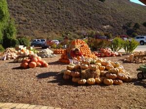 pumpkinn piles