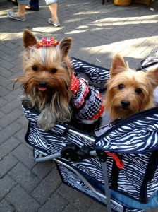 yorkies in cart