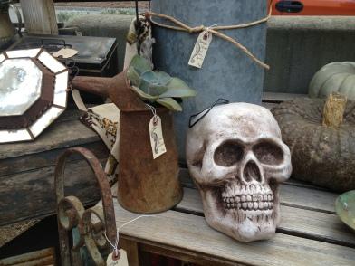 coastal/skull
