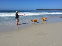 dogs:surf